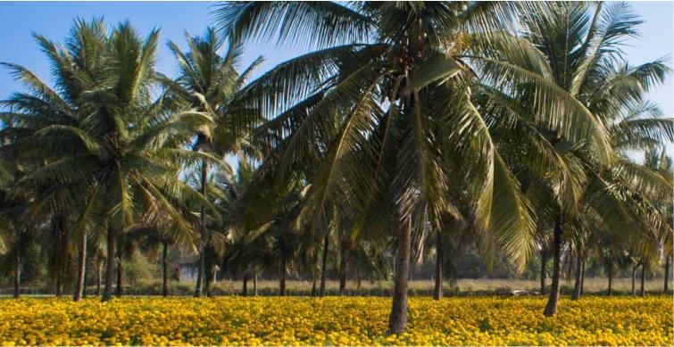 Nachhaltiger Anbau unter Einsatz von Mischkulturen und umweltfreundliche Produktion